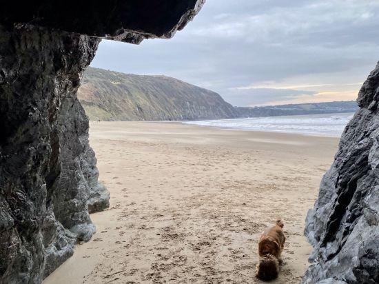 Ruby Exploring Penbryn Beach
