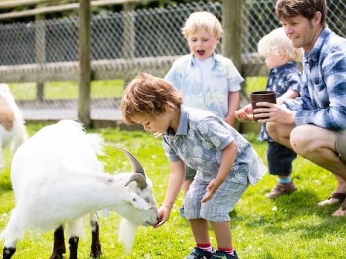 Meet The Farm Yard Friends