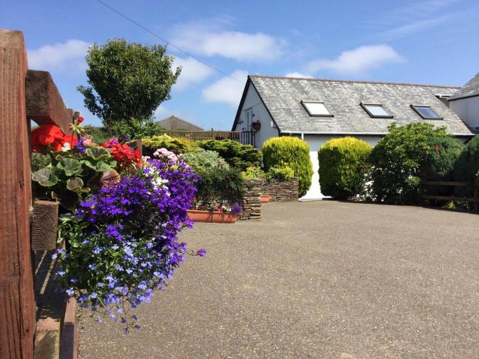Swallows At Venndown Farmhouse