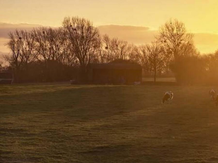 The Lamb At Pennard Hill Farm