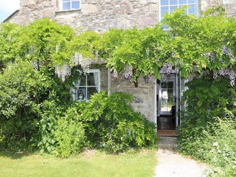 Hollyhock - entrance to patio and garden
