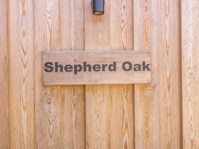 Shepherd Oak