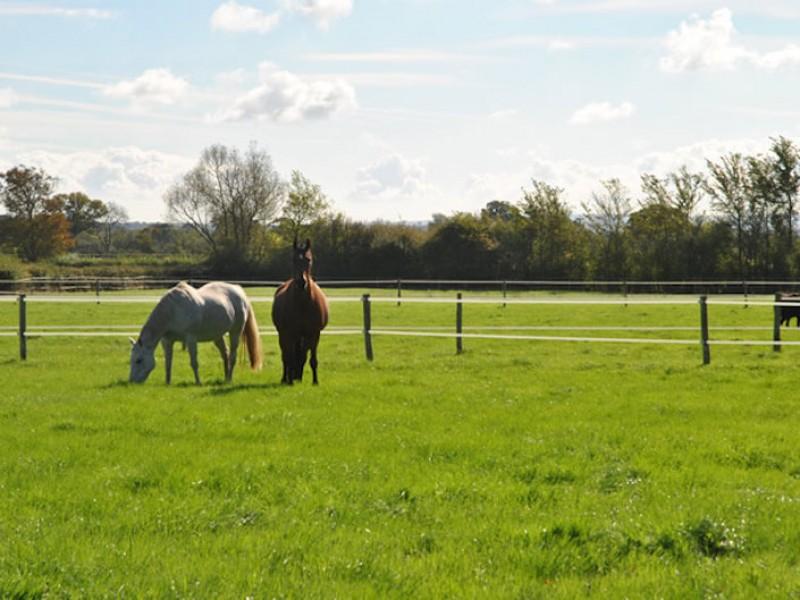 Horses at Lois Farm