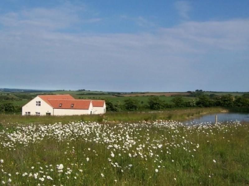 Wildflower mearow at Greetham Retreat