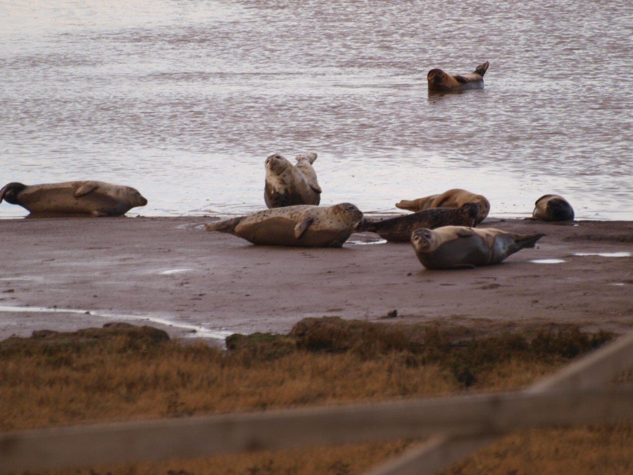 Seals at Seal Sands Hartlepool