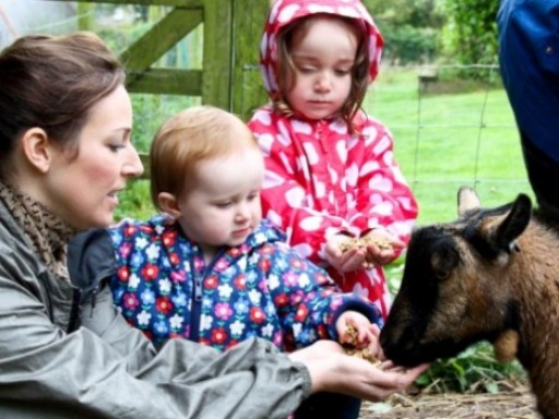 Free animal feeding each weekday morning at Polean Farm