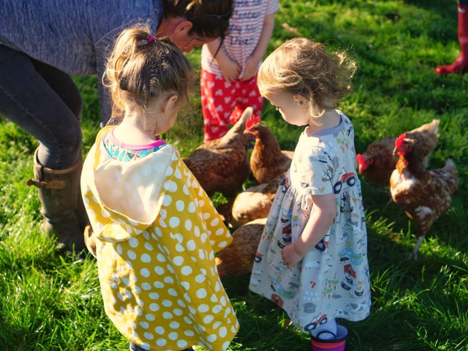 Feeding the Hens
