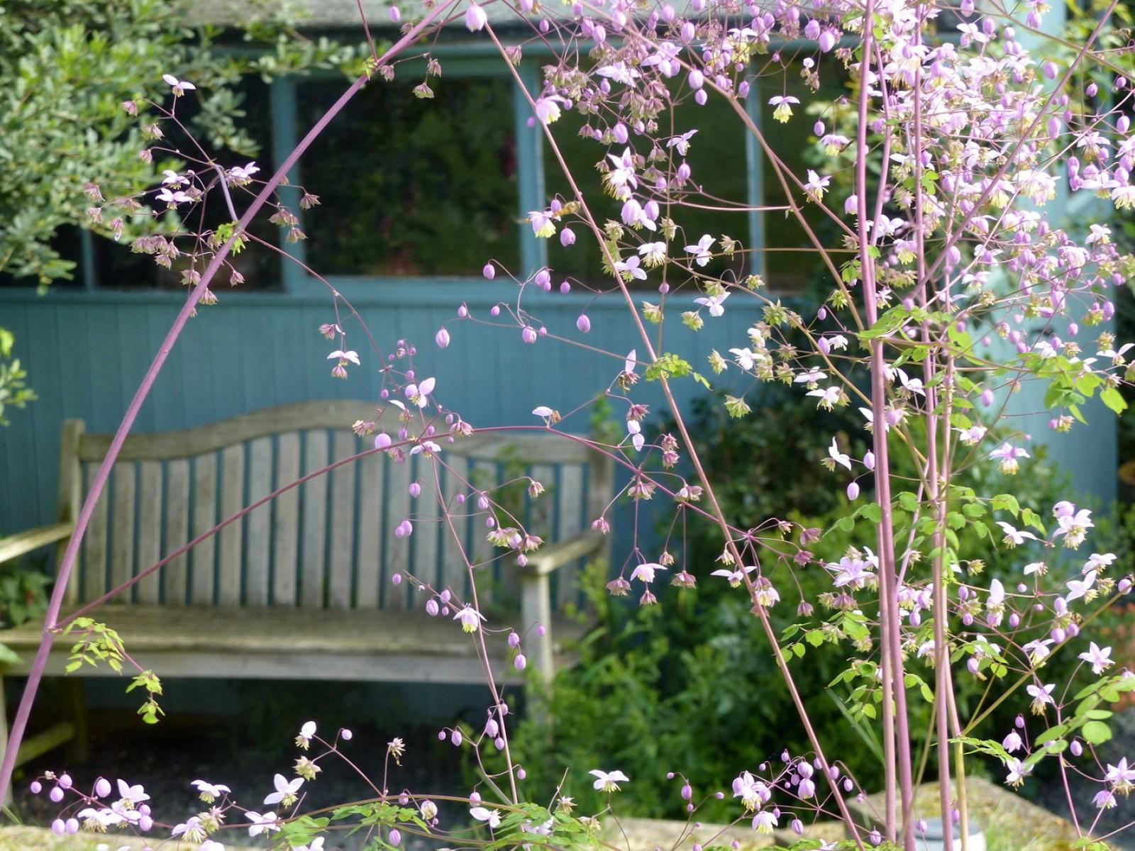 Millsyde at Hendersyde garden